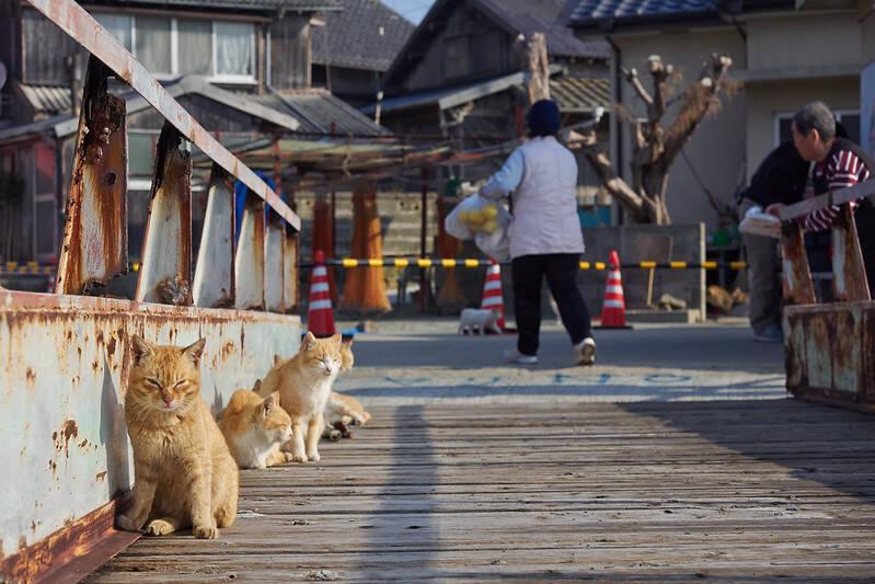 Aoshima Cats