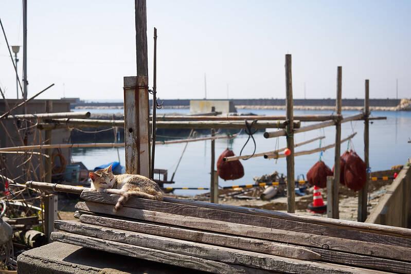 Aoshima Dock