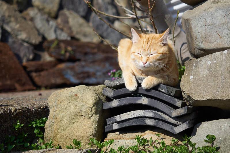 Cat Sleeping On Roof Slabs