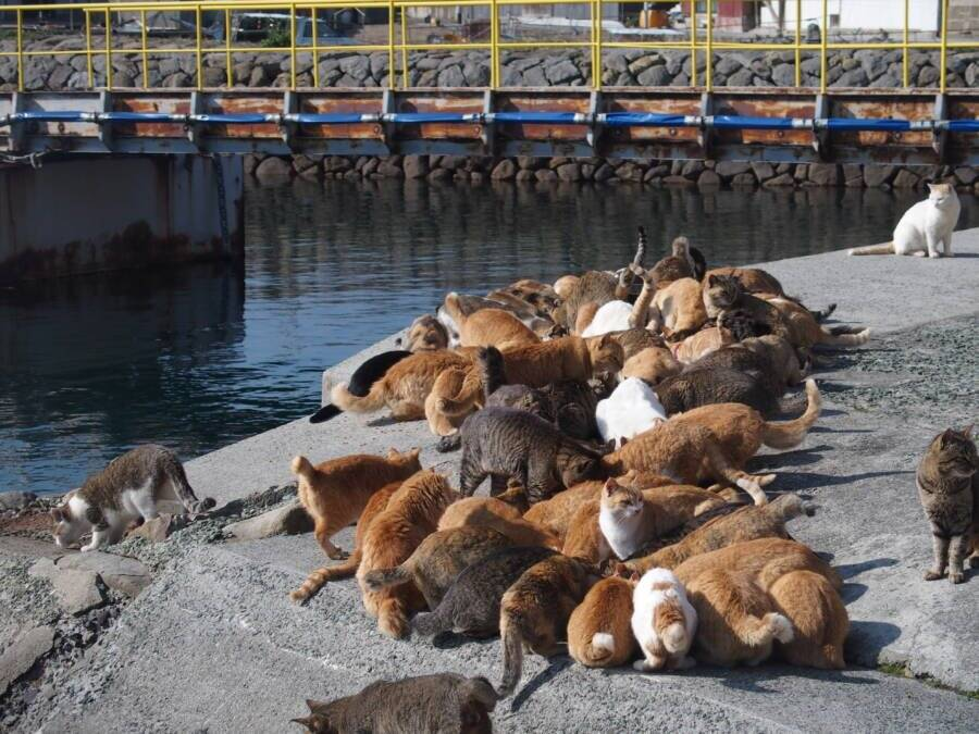 Cats On Pier