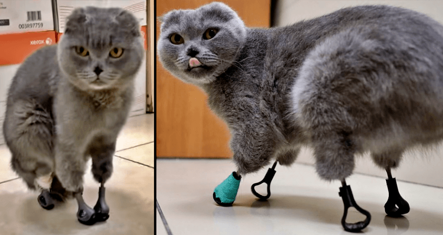 From A Bionic Cat To A Skinless Shark, These Are The Best Science Images Of 2020