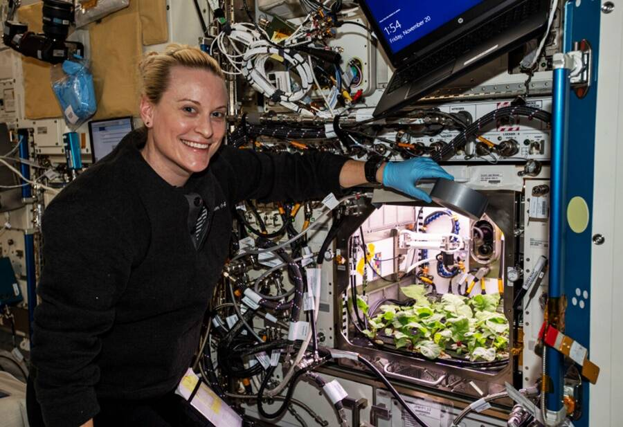 Growing Radishes In Space