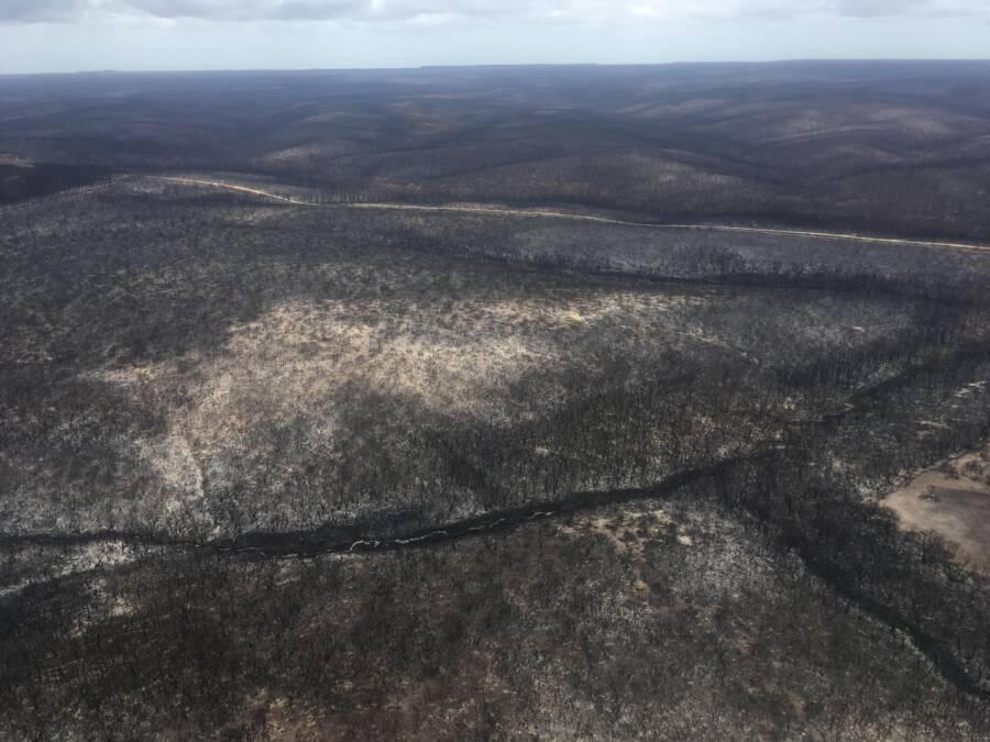 Kangaroo Island After Bushfire