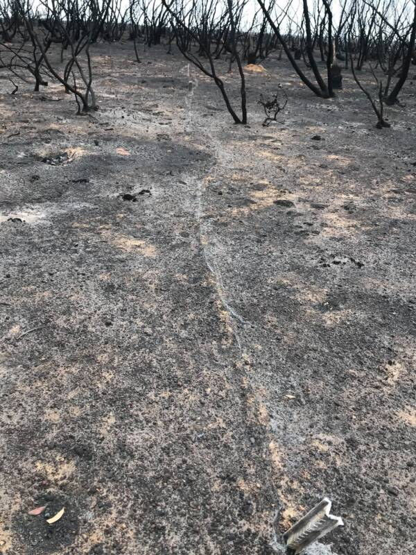 Kangaroo Island On Week After Fire