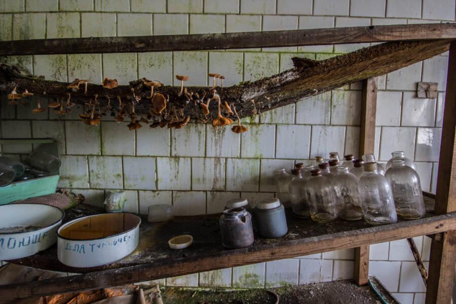 Pripyat Mushrooms At Abandoned Hospital