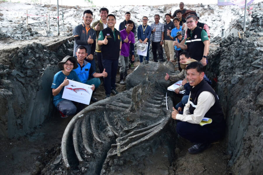 Researchers And The Ancient Whale Carcass