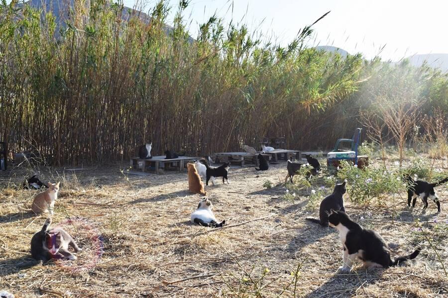 Syros Cat Colony