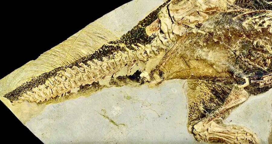 This Fossil Reveals The One Orifice That Dinosaurs Used To Pee, Poop, And Procreate