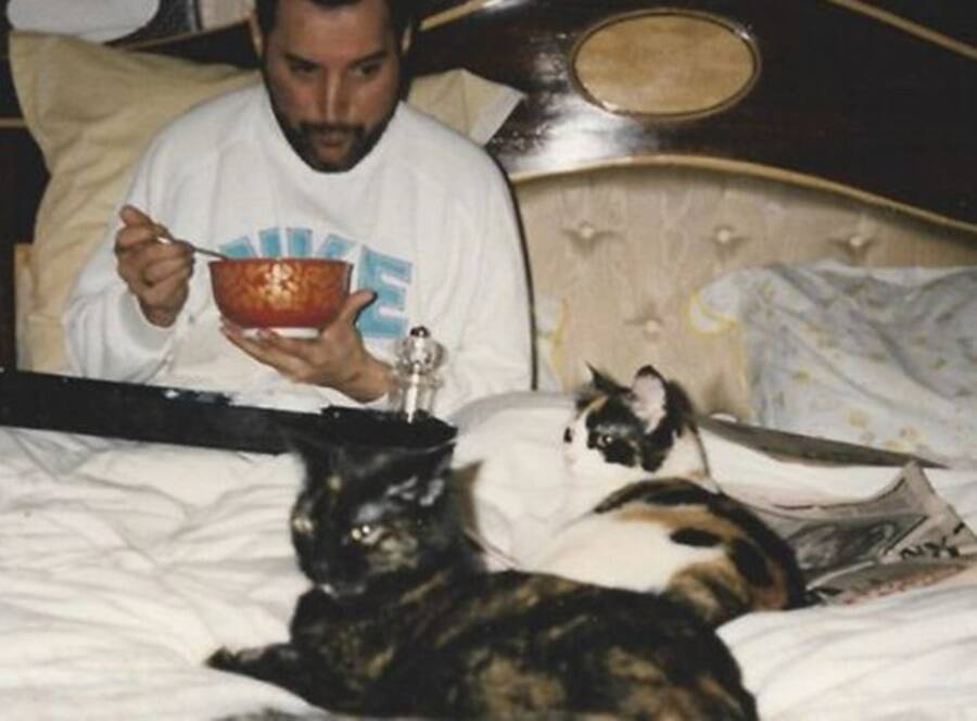 Freddie Mercury In Bed With Cats