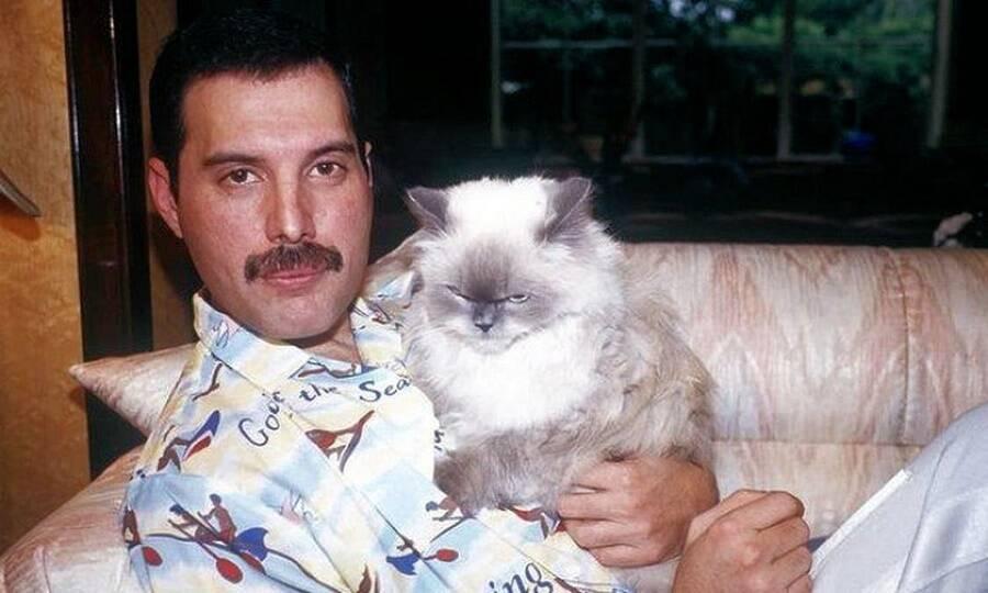 Mercury Holding Cat