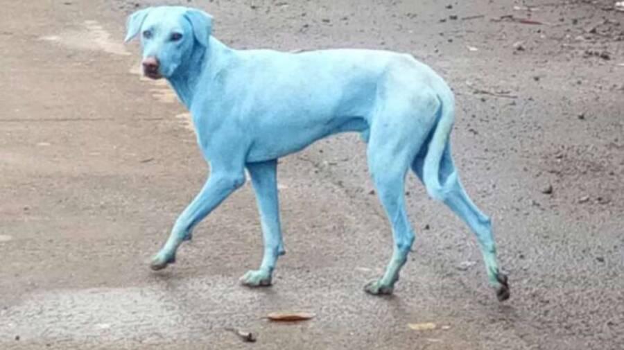 Blue Dog Mumbai