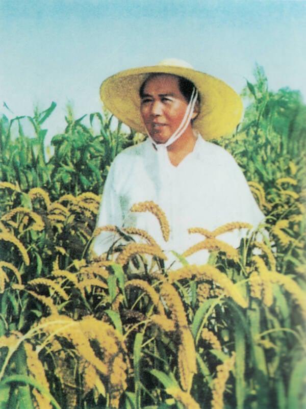 Mao Zedong In Rice Field
