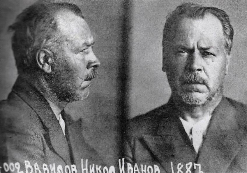 Vavilov In Prison