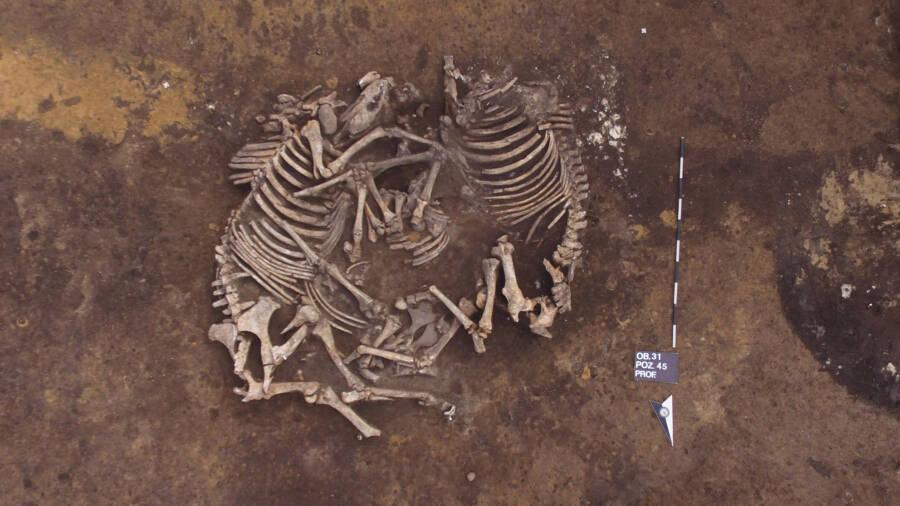 Bronze Age Horse Burial