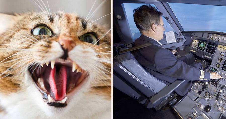 A Plane Was Just Forced To Make An Emergency Landing After A Stowaway Cat Attacked The Pilot