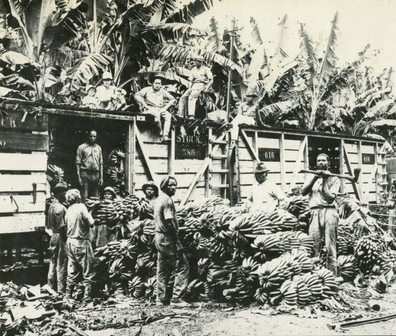 United Fruit Plantation