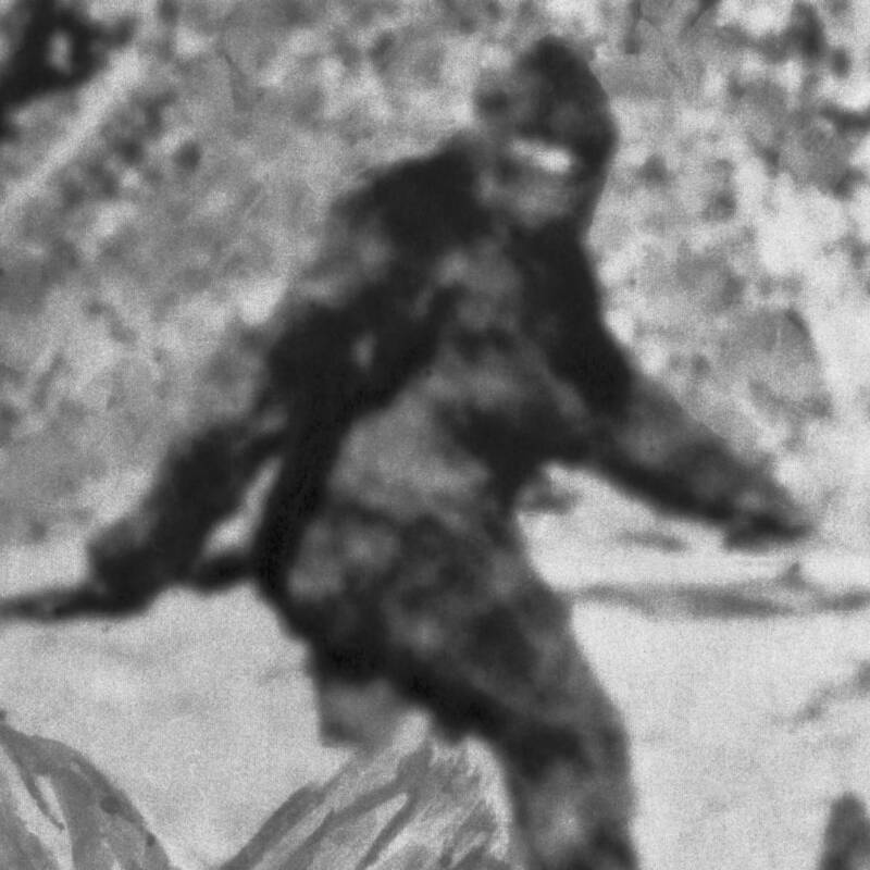 Bigfoot Up Close