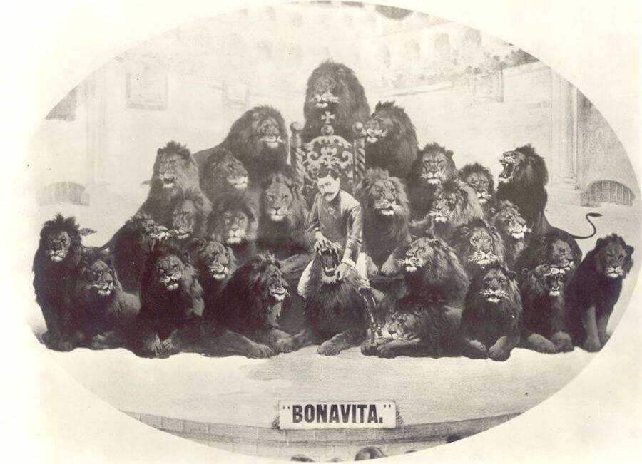 Bonavita With Lions And Title