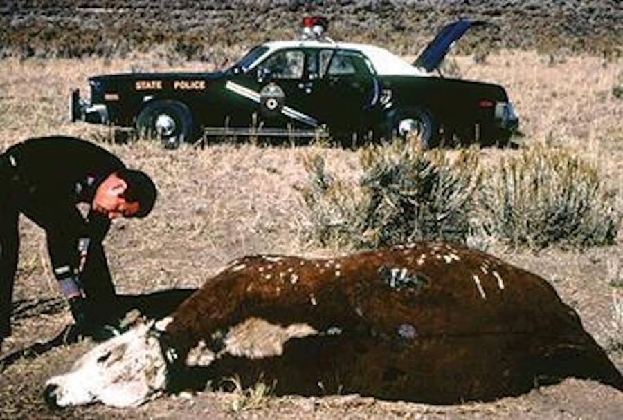 Gabriel Valdez Cattle Mutilation