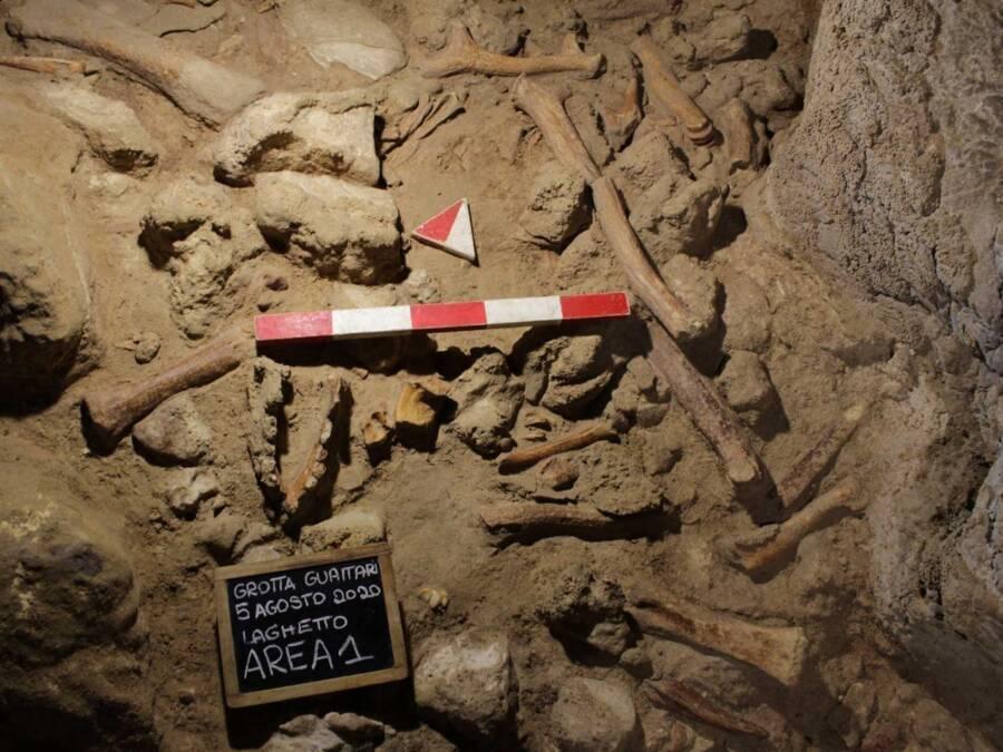Guattari Cave Bones