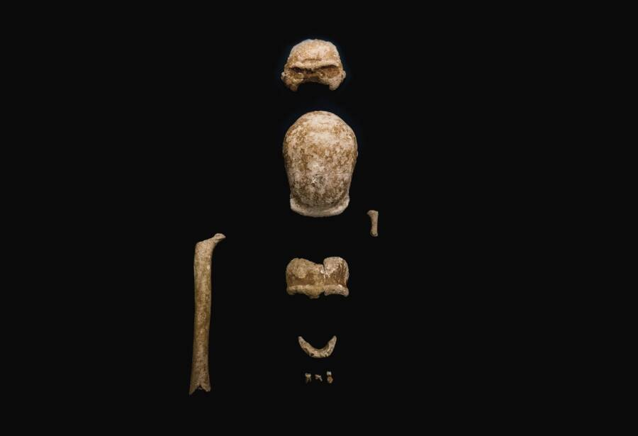 Skull And Jaw Bones Of Guattari Cave