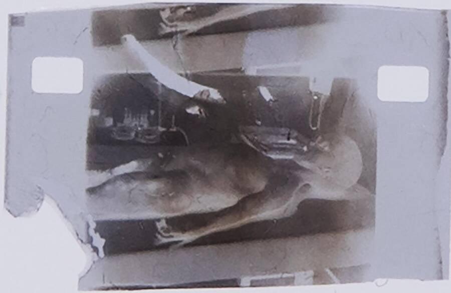 Autopsia extraterrestre nft