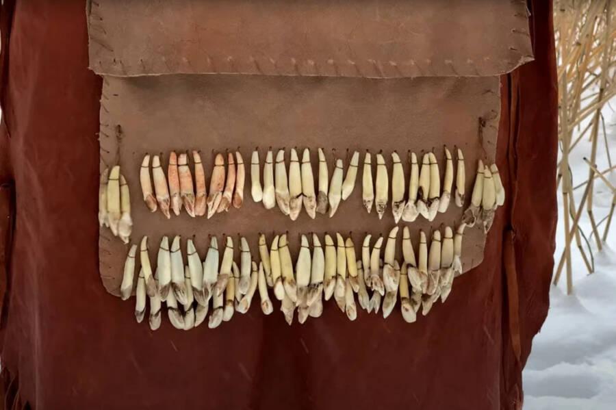 Elk Tooth Ornaments