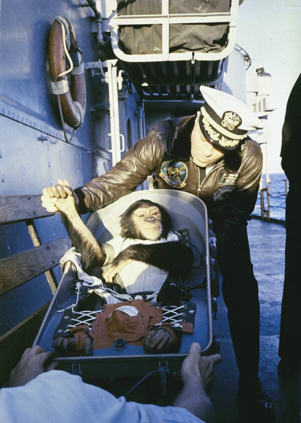 Ham The Chimp Recovery