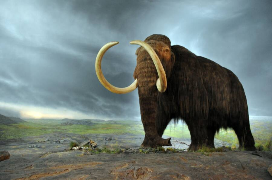 Illustration Of Woolly Mammoth