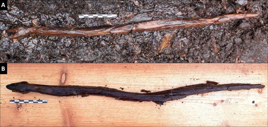 Järvensuo Snake Staff Before And After