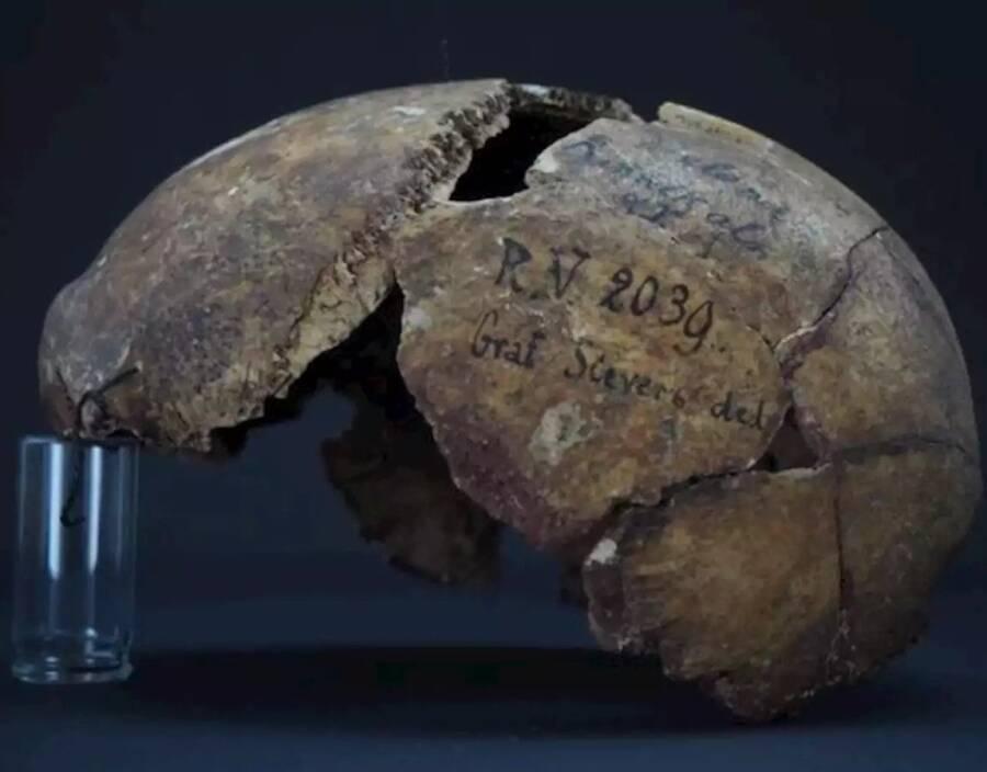 Rv 2039 Skull