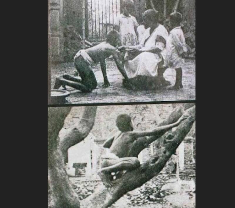 Sanichar In Tree
