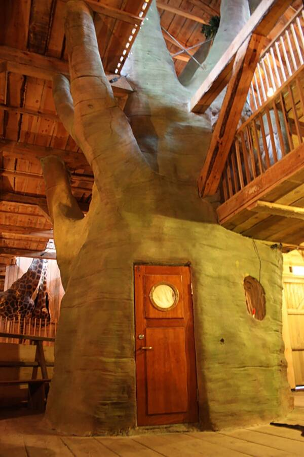 Tree Of Life In Noah's Ark