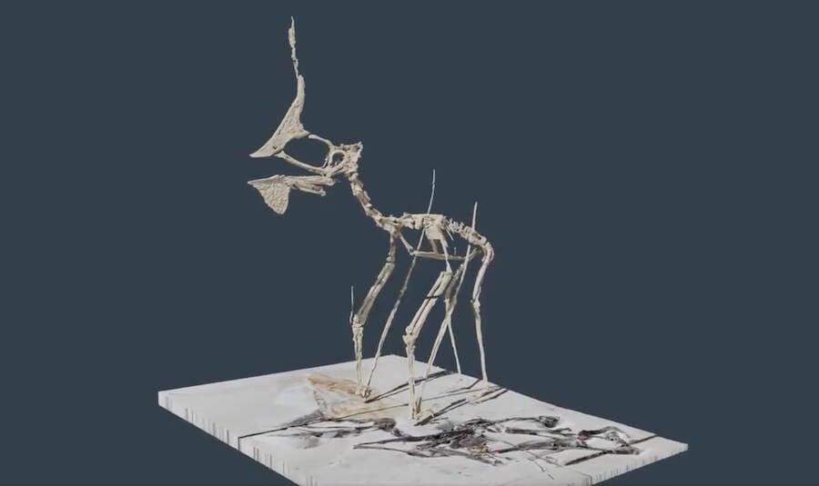 Modelo Digital de Tupandactylus Navigans