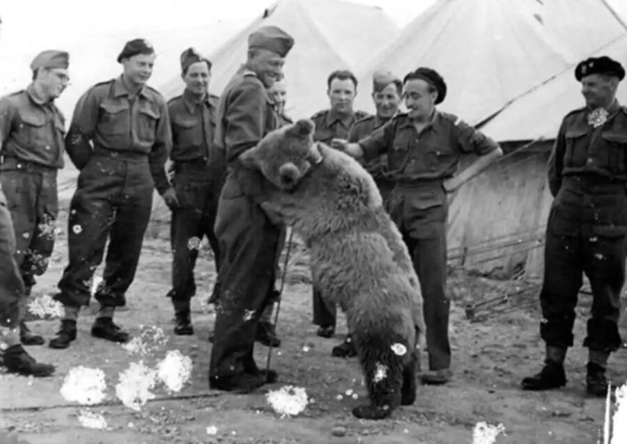 Curiosidades da história Wojtek, o urso