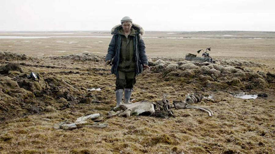 Kotelny Island Woolly Mammoth Site