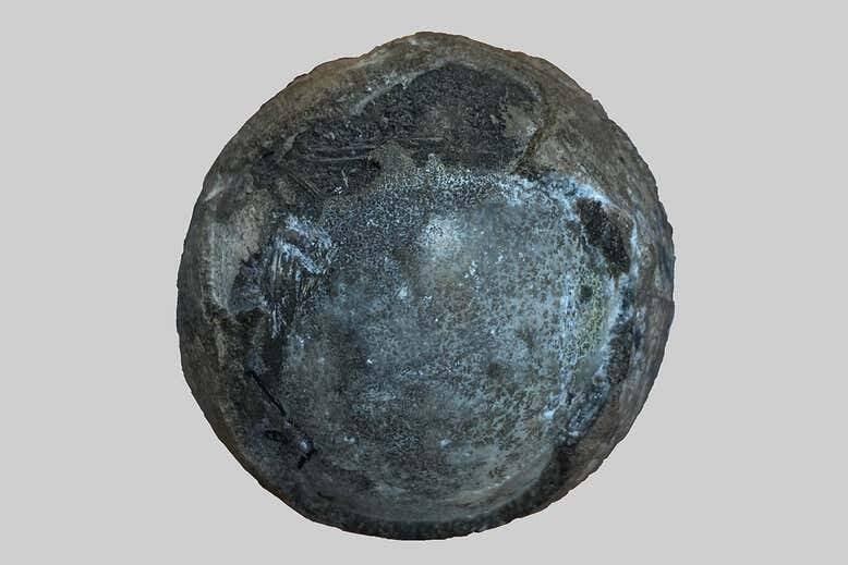 Ovo de Tartaruga Nanhsiungchelyid