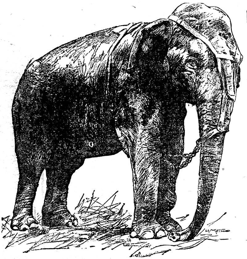 Topsy The Elephant