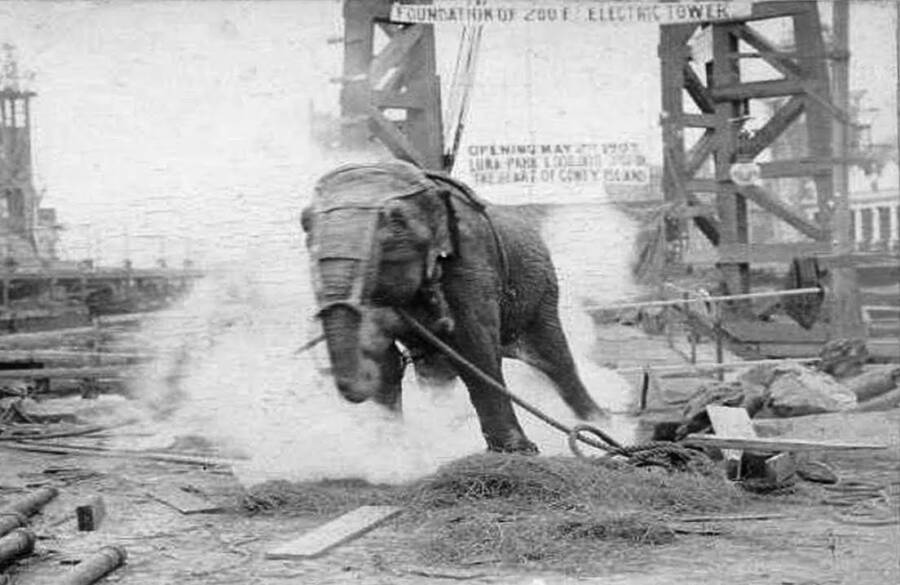 Video Of Topsy The Elephant