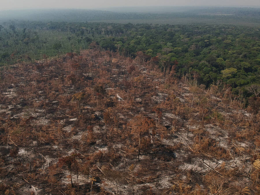 Deforestation In Apui
