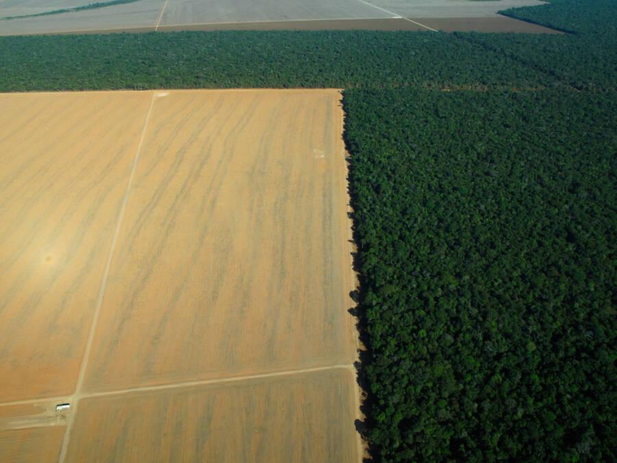 Deforestation In Brazilian Amazon