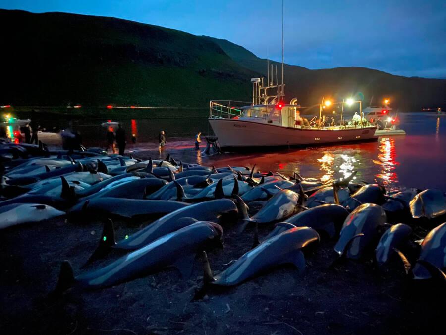 Faroe Islands Dolphins