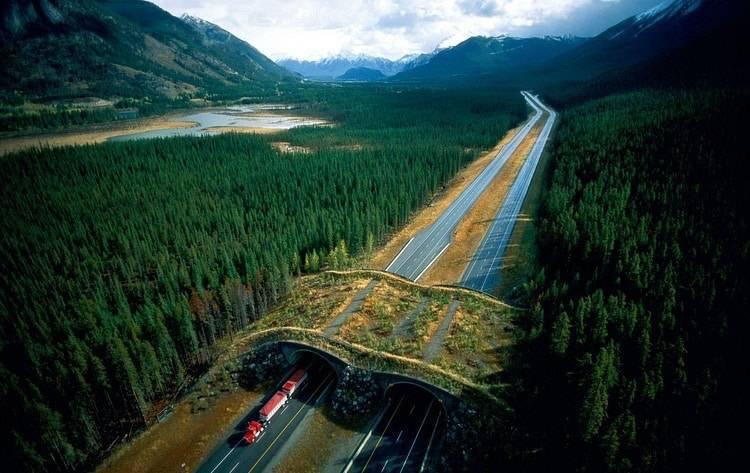 Wildlife Crossing Alberta Canada