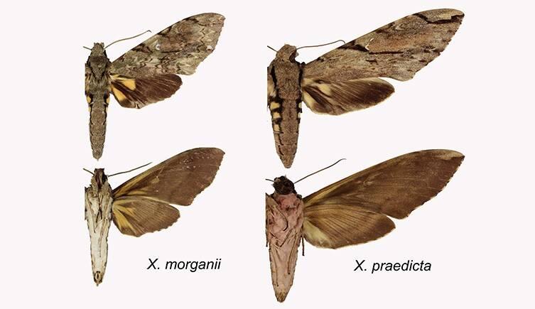 Differences Between Moth Species